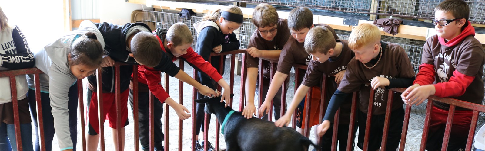 4th grade students pet a goat during their cows and plows fieldtrip